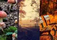 Заставка Осень