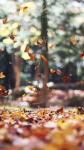 Осень 10