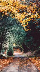 Осень 06