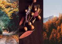 Осень картинки для телефона